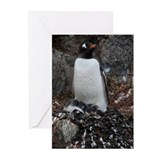 Gentoo Penguin at Port Lockroy Greeting Cards (Pk