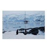 Gentoo Penguin at Port Lockroy Postcards (Package