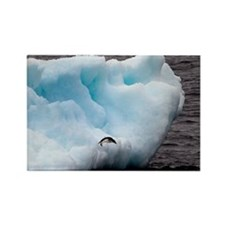 Adelie Penguin on Iceberg Rectangle Magnet