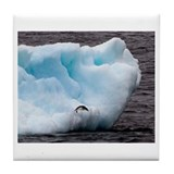 Adelie Penguin on Iceberg Tile Coaster