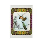 Rufous Hummingbirds Rectangle Magnet (100 pack)