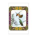 Rufous Hummingbirds Mini Poster Print