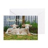 Thank You Cards ~ Buddy Lambs (Pk o