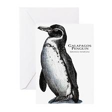 Galapagos Penguin Greeting Cards (Pk of 20)