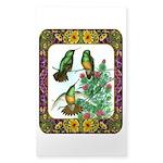 Buff Bellied Hummingbirds Sticker (Rectangle 10 pk