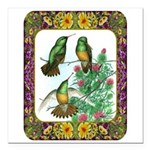 Buff Bellied Hummingbirds Square Car Magnet 3&quot