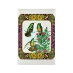 Buff Bellied Hummingbirds Rectangle Magnet (100 pa