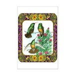 Buff Bellied Hummingbirds Mini Poster Print