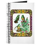 Buff Bellied Hummingbirds Journal