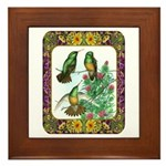 Buff Bellied Hummingbirds Framed Tile
