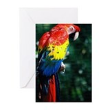 Scarlet Macaw showing his colors Greeting Cards (P