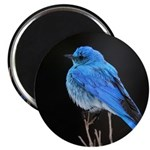 Mountain Blue Bird Magnet