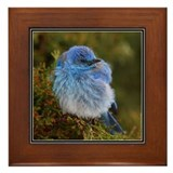 Mountain bluebird Framed Tiles