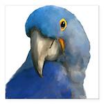 Hyacinth Macaw Square Car Magnet 3