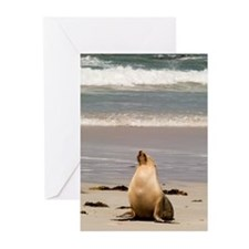 Australian Sea Lion Greeting Cards (Pk of 10)