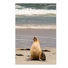 Australian Sea Lion Postcards (Package of 8)