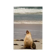 Australian Sea Lion Rectangle Magnet