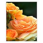 Romantic Peach Roses Small Poster