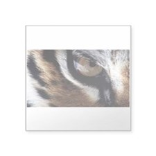 "Eye of the tiger Square Sticker 3"" x 3"""
