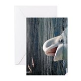 Beluga Whales 5.jpg Greeting Cards (Pk of 20)