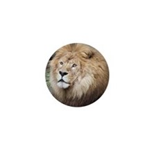 African Lion Mini Button (100 pack)