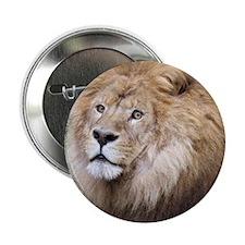 "African Lion 2.25"" Button"