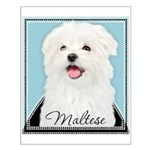 Cute Maltese Small Poster