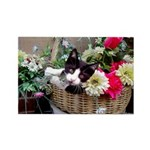 Kitten in a Basket Rectangle Magnet (100 pack)