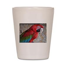 Green Wing Macaw Shot Glass
