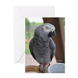 Congo African Grey Greeting Card