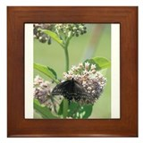 Black Swallowtail Butterfly on Milkweed Framed Til