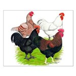 Heavy Breed Roosters Small Poster