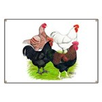 Heavy Breed Roosters Banner