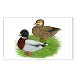 Grey Call Ducks Sticker (Rectangle 50 pk)