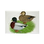 Grey Call Ducks Rectangle Magnet (10 pack)