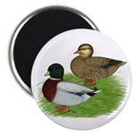 Grey Call Ducks Magnet