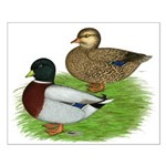 Grey Call Ducks Small Poster