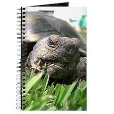 Helaine's Desert Tortoise Journal