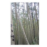 Aspen Trunks Postcards (Package of 8)