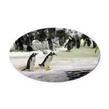 Gentoos Penguins Oval Car Magnet