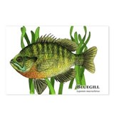 Bluegill Postcards (Package of 8)