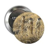Four Meerkats Button