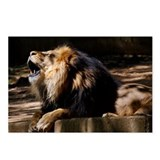 King of the Jungle Postcards (Package of 8)