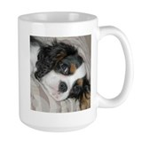 Cavalier King Charles  Tasse