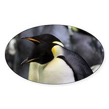 Emperor Penguins 4 Decal