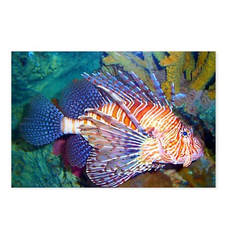 Lion or Turkey Fish Postcards (Package of 8)