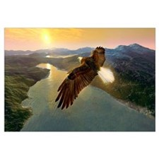 Bald eagle in flight, artwork