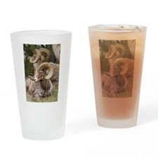 Bighorn Sheep Drinking Glass