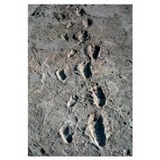 Trail of Laetoli footprints