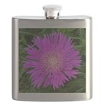 .stoke's aster. Flask